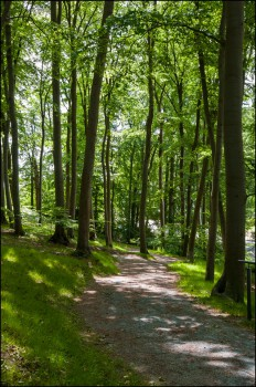 Bildnummer  L 013 Waldweg in Sellin