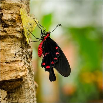 Bildnummer SCH 009 Schmetterlinge