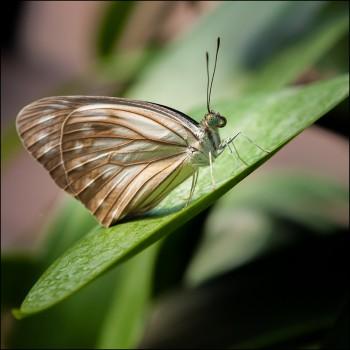 Bildnummer SCH 019 Schmetterling