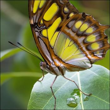 Bildnummer SCH 20 Schmetterlinge Jane Pohl Trassenheide