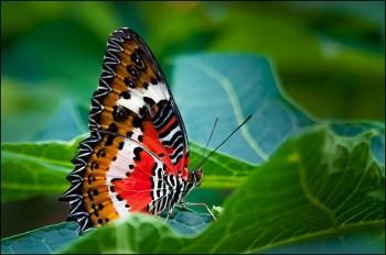 Bildnummer Sch 002 Schmetterling Jane Pohl