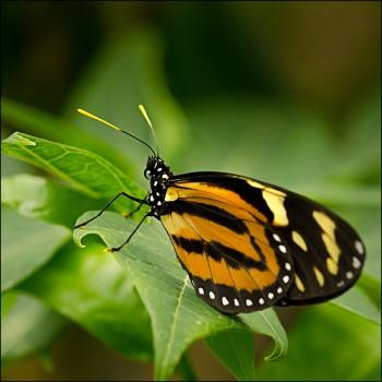 Bildnummer Sch 007 Schmetterling