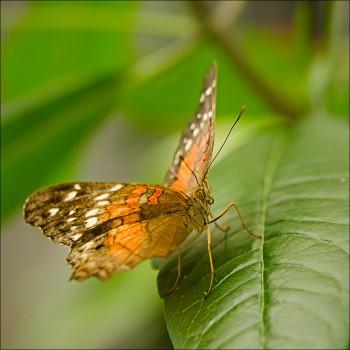 Bildnummer Sch 018  Schmetterlinge