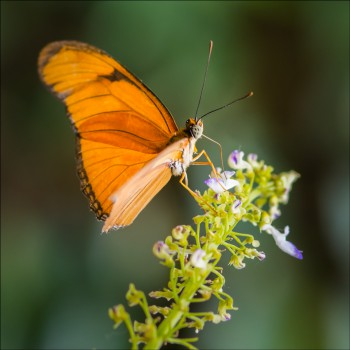 Bildnummer Sch 022 Schmetterlinge Trassenheide Jane Pohl