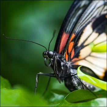 Bildnummer Sch 023 Schmetterlinge Trassenheide Jane pohl
